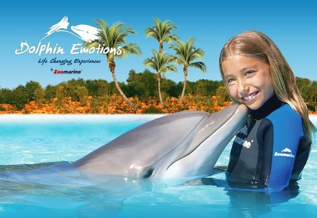 Things to Do - Swim with Dolphins at Zoo Marine - Do not book - Olhos de Agua - rentals