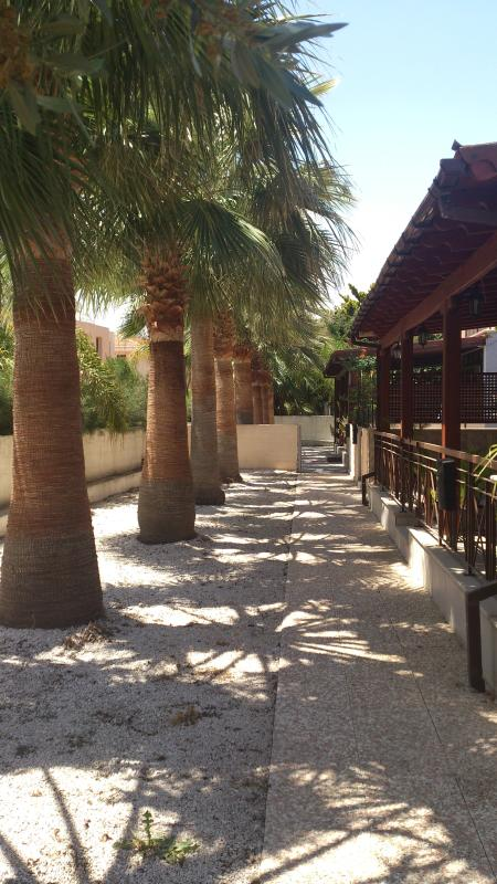 Shared garden at the front entrance filled with palm trees! - Oroklini Star 3,Spacious flat, wonderful location - Larnaca District - rentals