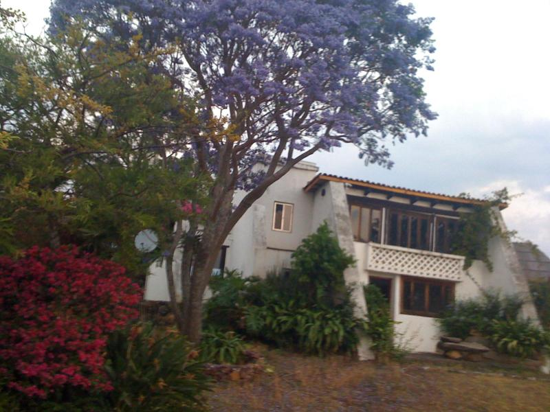 Jacaranda trees bloom during Semana Santa - Semana Santa on Lake Patzcuaro - Patzcuaro - rentals