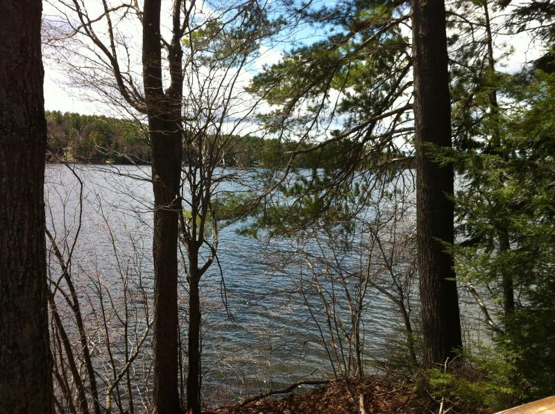 beautiful pristine lake - Private Retreat in Woods on Pristine Rust Pond - Wolfeboro - rentals