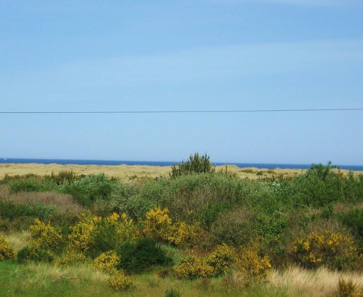 Ocean Views from the Beach Home - The Sea Star ~ Ocean View Beach Home ~ Short Walk to Beach! - Ocean Shores - rentals