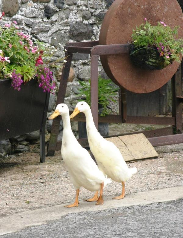 The puddle ducks - Rebecca PuddleDuck Cottage,village farm nr Keswick - Keswick - rentals