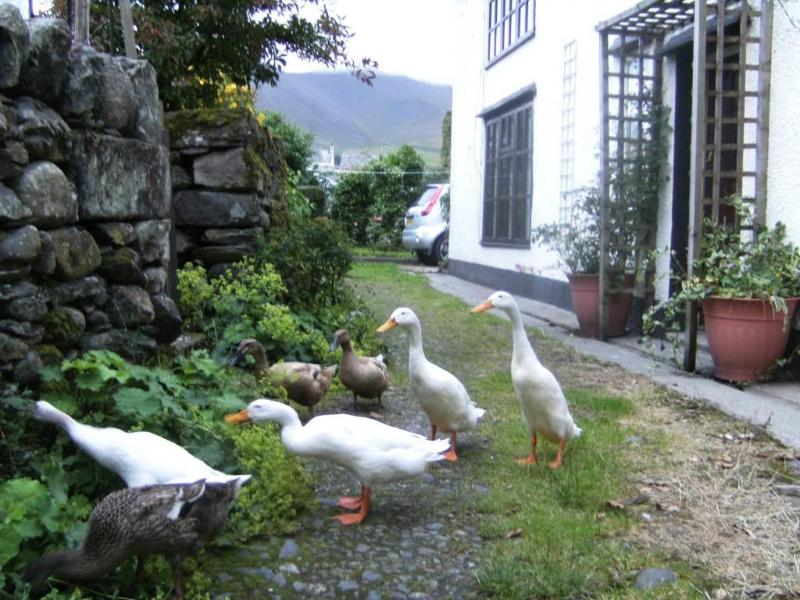 The puddle ducks by Jemima Puddle duck cottage - Rebecca PuddleDuck Cottage,village farm nr Keswick - Keswick - rentals