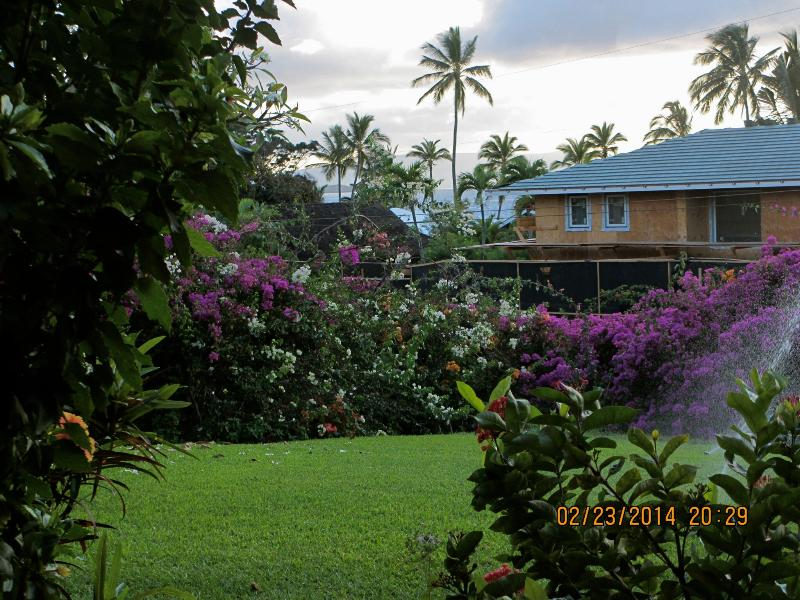 Beautiful lawn and garden and peek a boo ocean view - Close to ocean-Wailea Ekahi 20B - Wailea - rentals