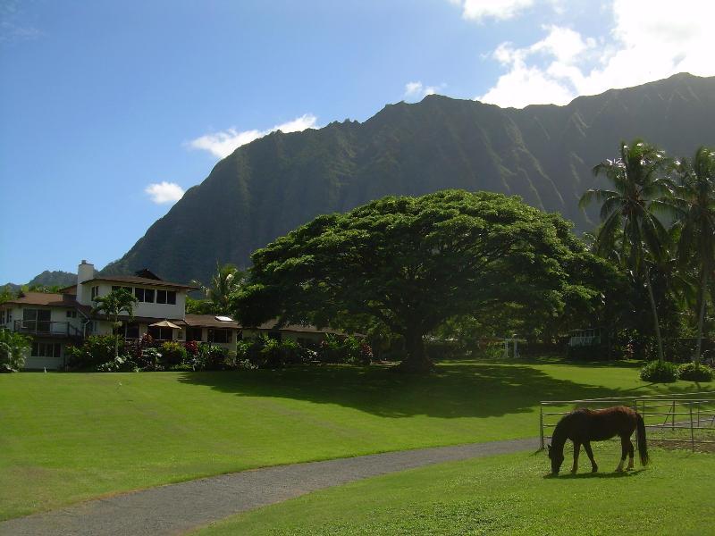 Open Palms Plantation - Open Palm Plantation  A Slice of Heaven in Paradise - Waimanalo - rentals