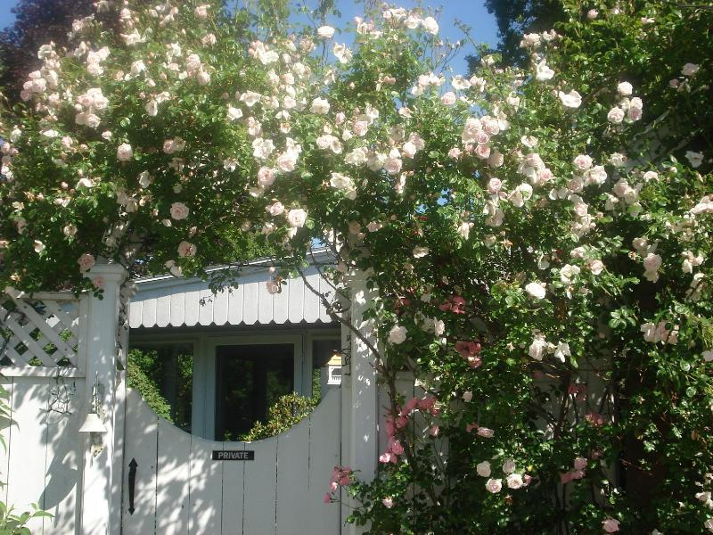 Reed Rose Cottage Entrance Roses in June - Reed Rose Cottage Suites, Pool & Gardens - Newport - rentals