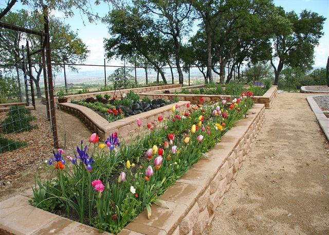 "Gardens with a view! - Vineyard, Oaks and Endless Views - Walk to Tasting Room  - ""Surprising"" - Paso Robles - rentals"