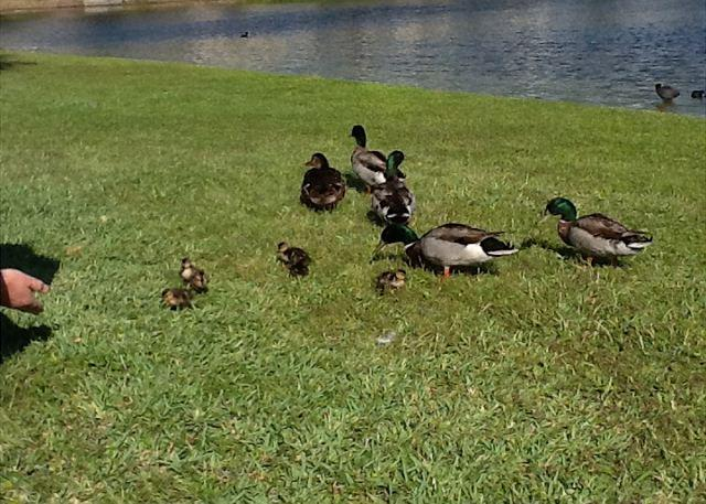 Duck Pond - Refreshing Condo Located at Magnolia House in Destin Pointe - Destin - rentals