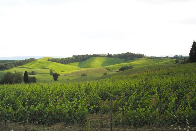 Italy Villa-ninety-nine - Image 1 - Tuscany - rentals