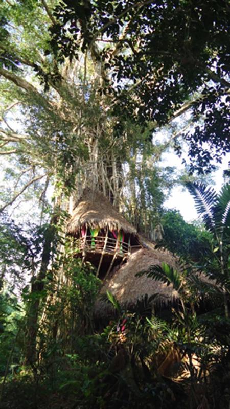 la maison du banian - La Maison du banian The Tree house in Vanuatu - Port Vila - rentals