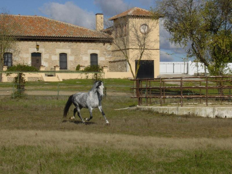 Villa at Farmland - Image 1 - Province of Salamanca - rentals