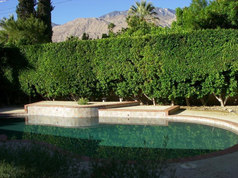 Enjoy quiet solitude in the very private backyard - Charming 1938 Spanish Bungalow - Palm Springs - rentals