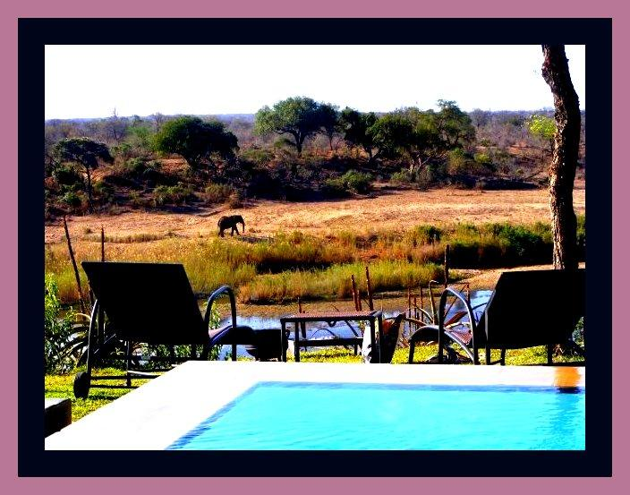 Infinity Pool in Big 5 Territory - Hippo Hills - Kruger National Park Boundary - Komatipoort - rentals