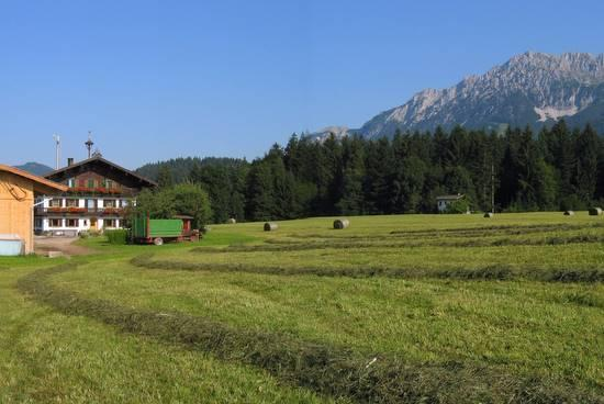 Harvest Time at Oberachenhof - Oberachenhof - Ellmau - rentals