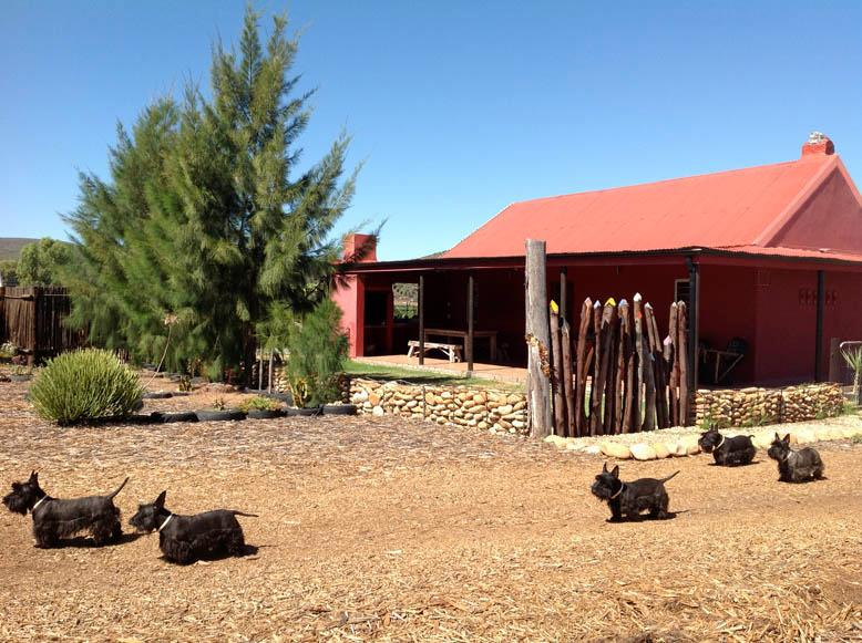 Relax cottage - RELAX, Self-catering cottage on Jamstreet Farm - Oudtshoorn - rentals