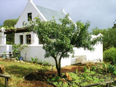 Rhebokskraal olive farm Cottages - Image 1 - McGregor - rentals