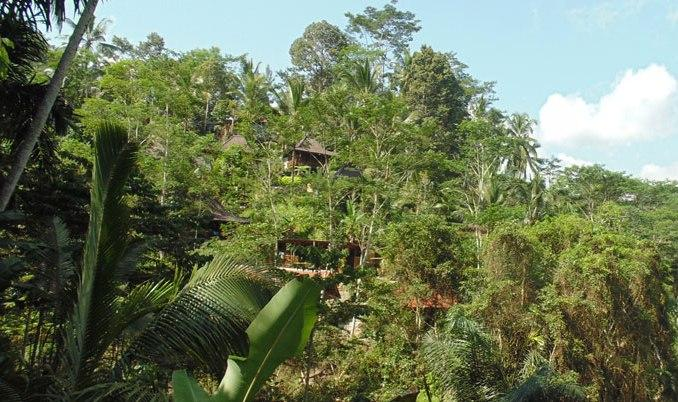 DD Ubud Villa Overview - DD Ubud Villa of Wooden House - Ubud - rentals