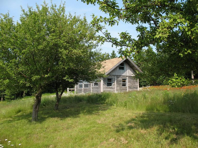 Cabin in apple orchard - Seaside Cabin on Chedabucto Bay - Charlo - rentals