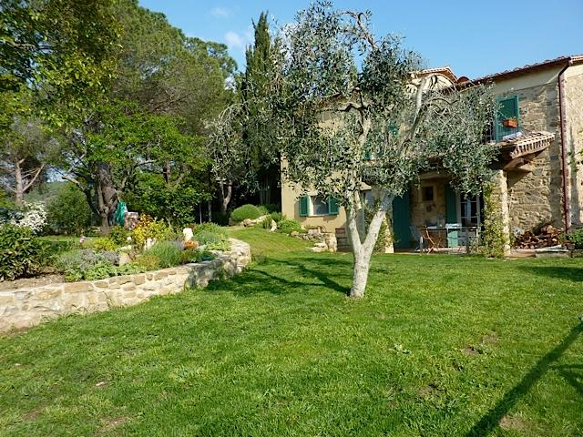 Front of house with olive tree - Sunset in Tuscany - Scansano - rentals