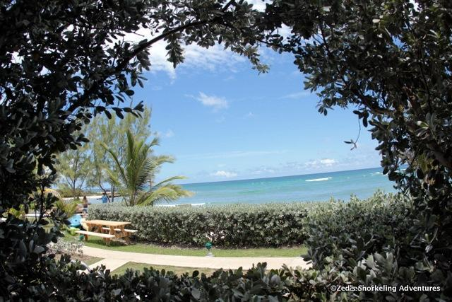 Patio View - Surfers Point Guest House - Almond 2 Bedroom - Christ Church - rentals