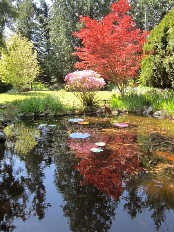 Garden in fall - Art House Suite B & B - Roberts Creek - rentals