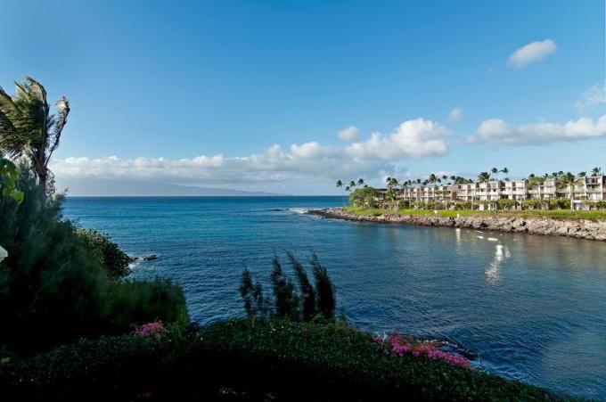 Aloha Honu Hale - Oceanfront Luxury - Image 1 - Napili-Honokowai - rentals