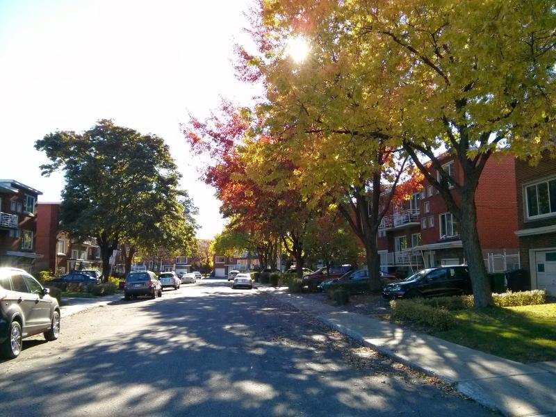 fall colors - New modern studio in green area - Montreal - rentals