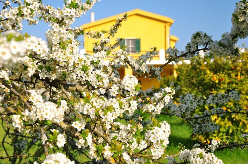 Villa Stella Maris - Villa Stella Maris- piece of heaven - Alghero - rentals