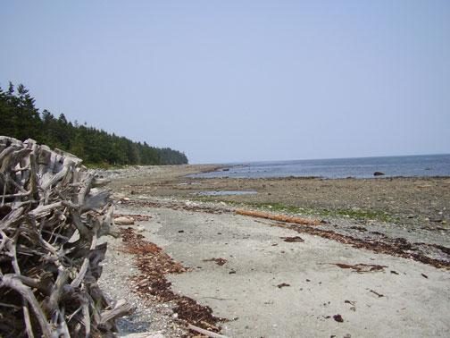 Ocean View from Private Beach - Pilgrim's Seaside Cabin - Comox - rentals