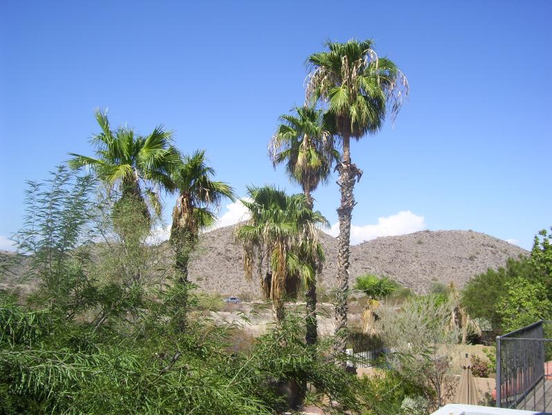 The view from the balcony off master bedroom - Mountain View 3 bedroom House in Ahwatukee! - Phoenix - rentals