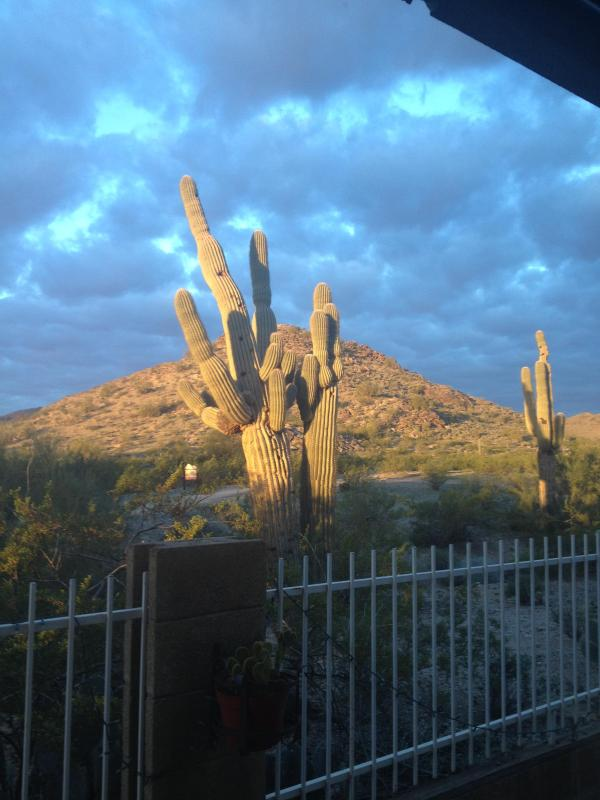 Daytime view from back yard - Mountain View 3 bedroom House in Ahwatukee! - Phoenix - rentals
