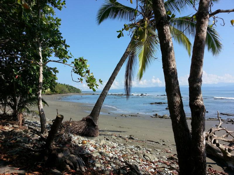 Tropical beach in front at low tide, warm and gentle waves, - Casita Tranquila, tropical beach jungle house. - Puerto Jimenez - rentals