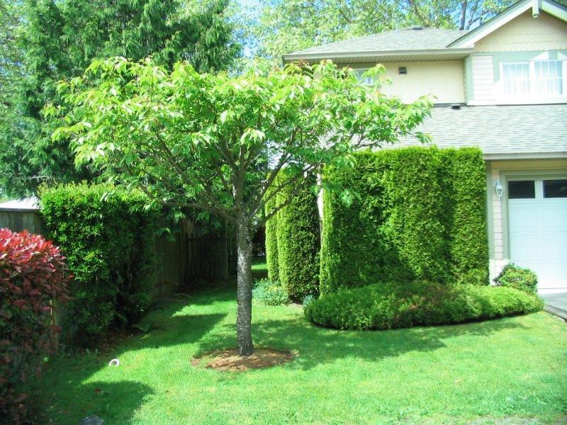 Arbour Gardens - Image 1 - Victoria - rentals