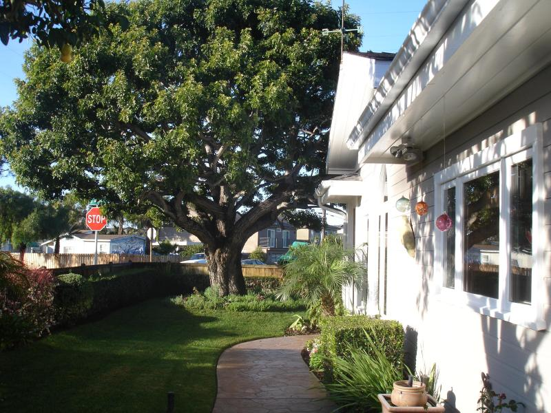 Pepper shade tree and path around the house - Classy Beach Cottege - Encinitas - rentals