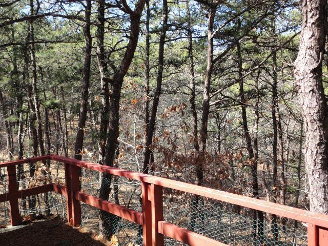 Overlooking Nature from the back deck - Privacy in the Pines & the Bay up the paved street - Wellfleet - rentals