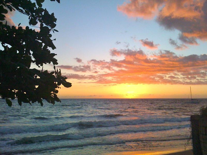 View from my living room couch - TROPICAL PARADISE- 2bed condo steps to beach! - Rincon - rentals