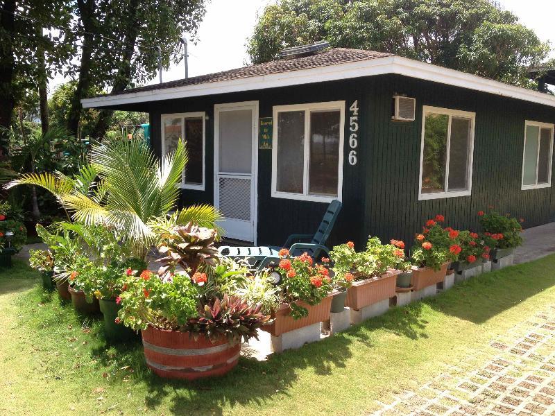 front of cottage - Ohia Kai Cottage Special Rate Kauai Kapaa downtown - Kapaa - rentals