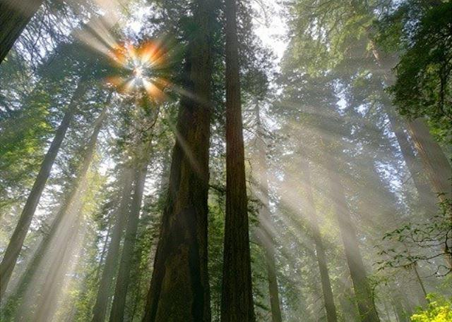 """""""Absolute Zen"""" Redwoods,Hot Tub, Sauna,Wine Country! Peace and - Image 1 - Guerneville - rentals"""