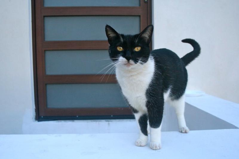 Marshmallow the Cat - New AKUMAL King Jungle Studio - KITCHEN, AC & WIFI - Akumal - rentals