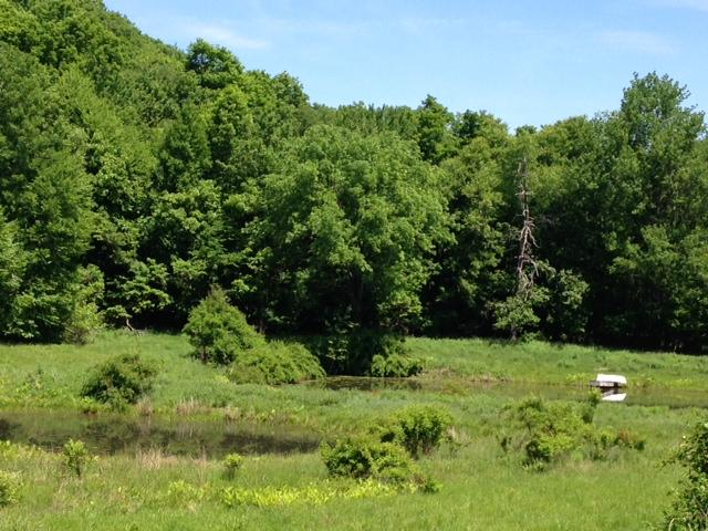 2 ponds with row boat - 17 acre Hudson Valley mini farm, Rhinebeck area - Pine Plains - rentals
