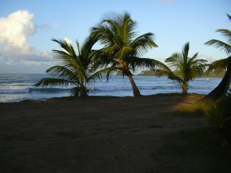 the beach Las bellenas - Playa Las Ballenas - Charming condo Las Terrenas Appartment - Las Terrenas - rentals