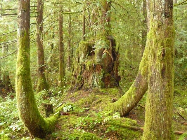 Magic circle - Eaglenest Sanctuary - Shawnigan Lake, BC - Shawnigan Lake - rentals