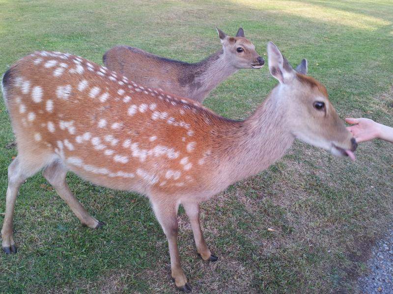 Deer at Warmwell - Birch Lodge, Warmwell, Dorset, near Weymouth - Dorchester - rentals