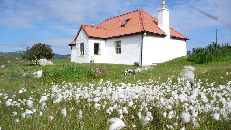 Bog cotton at mid summer. - Red House - Isle of Harris - rentals