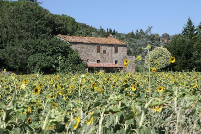 Property exterior - Tuscany 3 bedroom villa (BFY13466) - Camucia - rentals