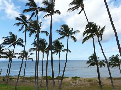 Hale Kai O'Kihei 1 Bedroom Ocean View 312 - Hale Kai O'Kihei 1 Bedroom Ocean View 312 - Kihei - rentals
