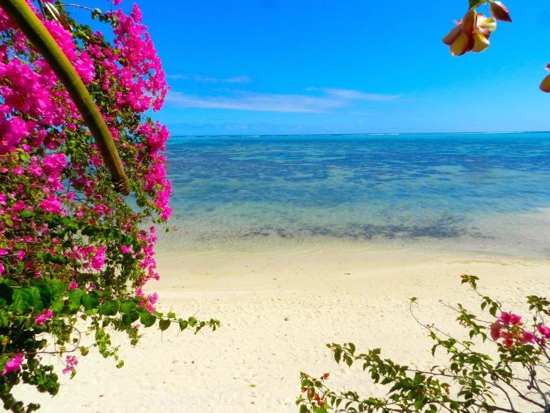 Front beach - Luxury Villa Moorea Haapiti by ENJOY VILLAS - Hauru - rentals