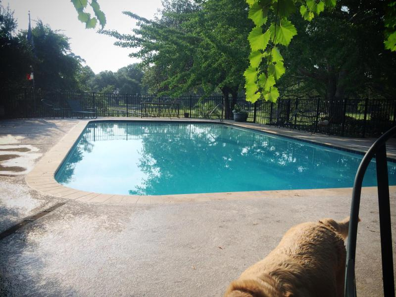 Totally Private pool overlooking marsh on two acre lot - Private pool Marshside.Foodie kitchen.Beautiful. - Charleston - rentals