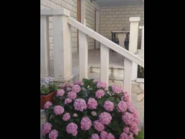 flowers - 5666  A(4) - Sveta Nedjelja - Sveta Nedjelja - rentals
