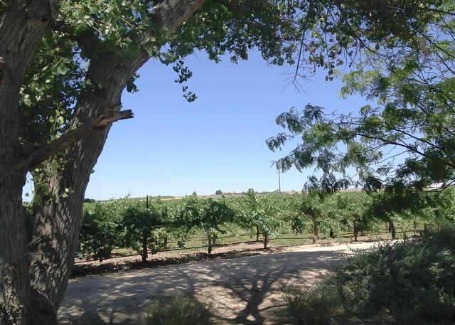Guesthouse at Sunset Vineyard - Image 1 - San Miguel - rentals